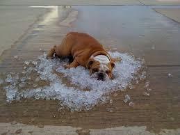 Hot Dog In Ice