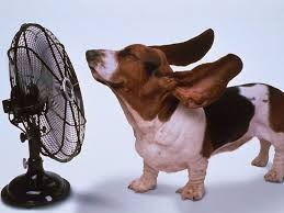 Hot Dog With Fan